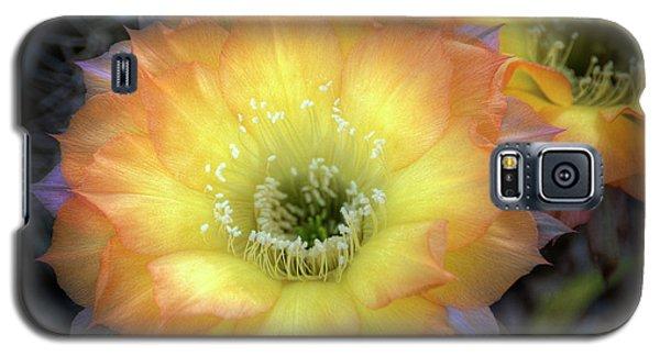 Golden Cactus Bloom Galaxy S5 Case
