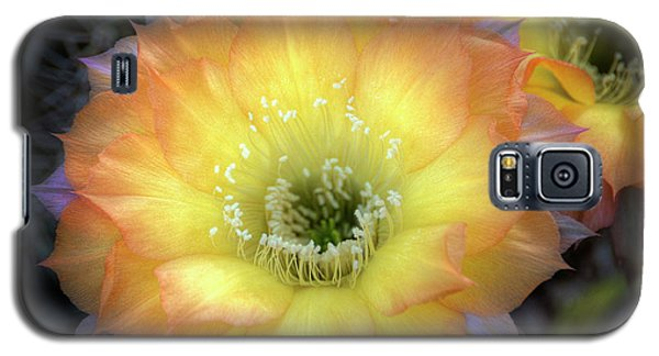 Golden Cactus Bloom Galaxy S5 Case
