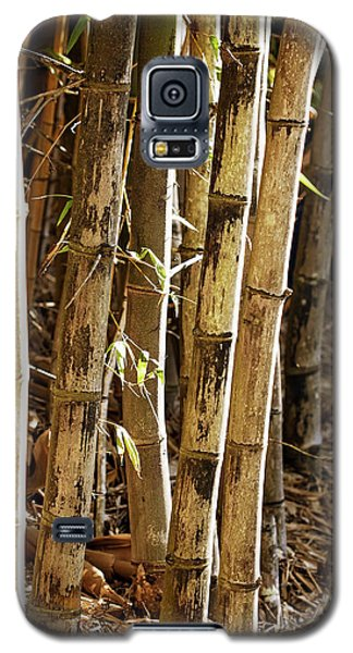 Galaxy S5 Case featuring the photograph Golden Canes by Linda Lees