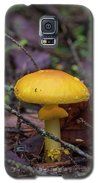 Golden Cap Galaxy S5 Case