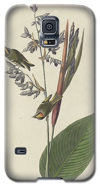 Golden-crested Wren Galaxy S5 Case by Rob Dreyer