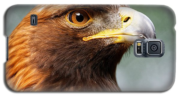 Golden Eagle Intensity Galaxy S5 Case