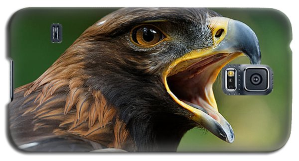Golden Eagle - Raptor Calling Galaxy S5 Case