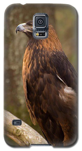 Golden Eagle Resting On A Branch Galaxy S5 Case by Chris Flees