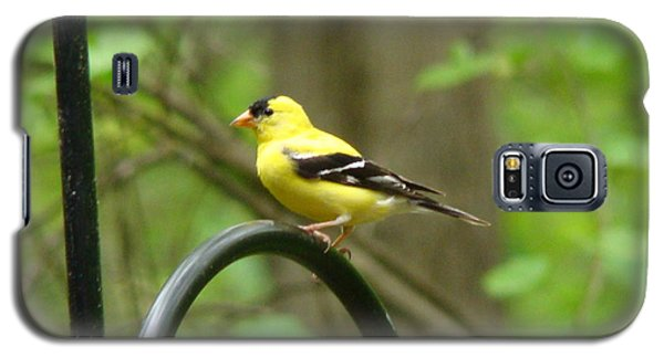 Galaxy S5 Case featuring the photograph Golden Finch by Rand Herron