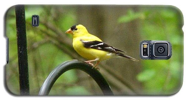 Golden Finch Galaxy S5 Case
