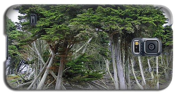 Golden Gate Sentinels Galaxy S5 Case