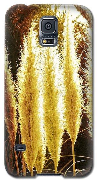 Golden Glow Galaxy S5 Case