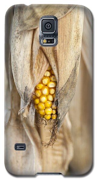 Golden Harvest Galaxy S5 Case