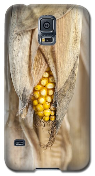 Golden Harvest Galaxy S5 Case