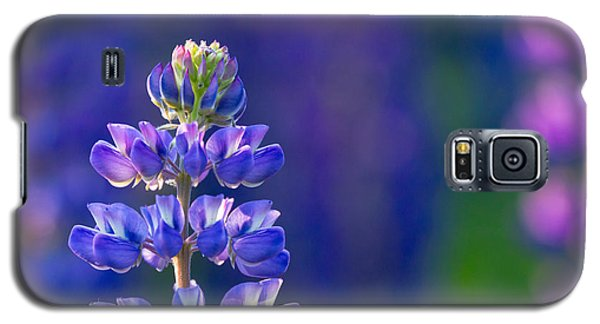 Galaxy S5 Case featuring the photograph Golden Hour Lupine by Mary Amerman