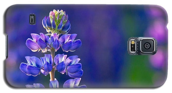 Golden Hour Lupine Galaxy S5 Case