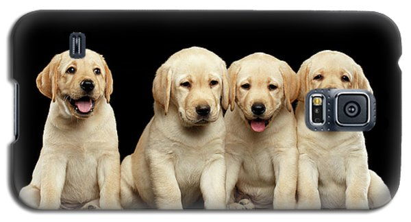 Golden Labrador Retriever Puppies Isolated On Black Background Galaxy S5 Case