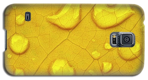 Golden Leaf Galaxy S5 Case