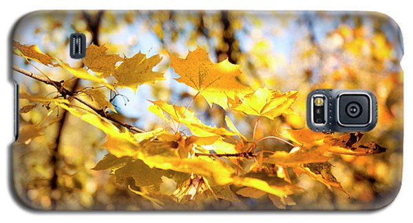 Galaxy S5 Case featuring the photograph Golden Leaves by Ivy Ho