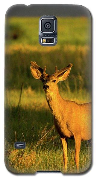 Golden Light Buck II Galaxy S5 Case