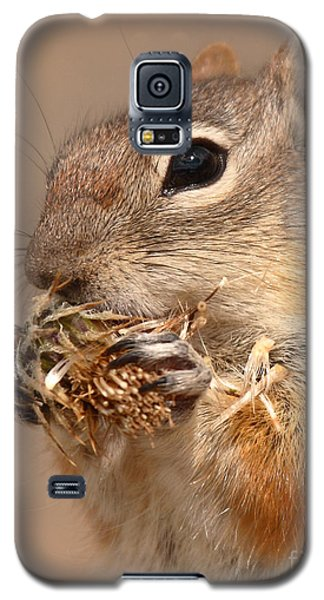 Golden-mantled Ground Squirrel Nibbling On A Bite Galaxy S5 Case by Max Allen