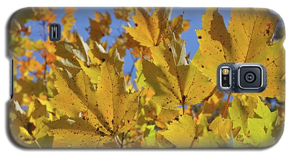 Golden Maple Galaxy S5 Case