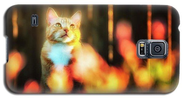 Golden Orange Tabby Galaxy S5 Case