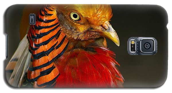 Galaxy S5 Case featuring the photograph Golden Ornamental Pheasant by Debbie Stahre