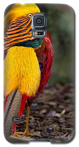Golden Pheasant Galaxy S5 Case by Greg Nyquist