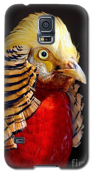 Golden Pheasant Galaxy S5 Case