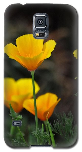 Golden Poppies  Galaxy S5 Case