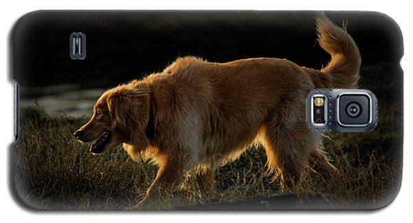 Galaxy S5 Case featuring the photograph Golden by Randy Hall