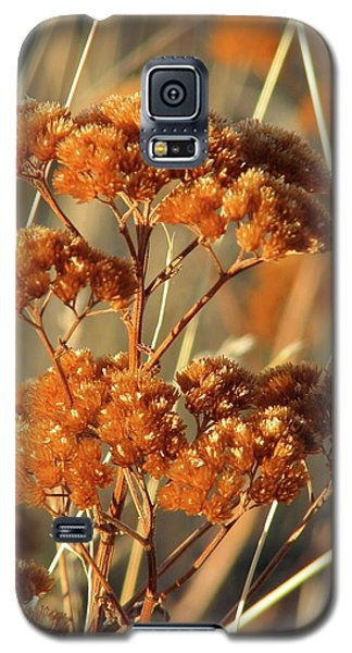 Golden Reach Galaxy S5 Case