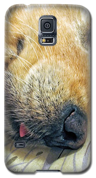 Golden Retriever Dog Little Tongue Galaxy S5 Case