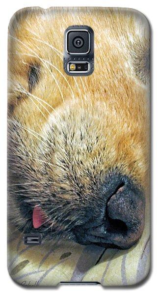 Golden Retriever Dog Little Tongue Galaxy S5 Case