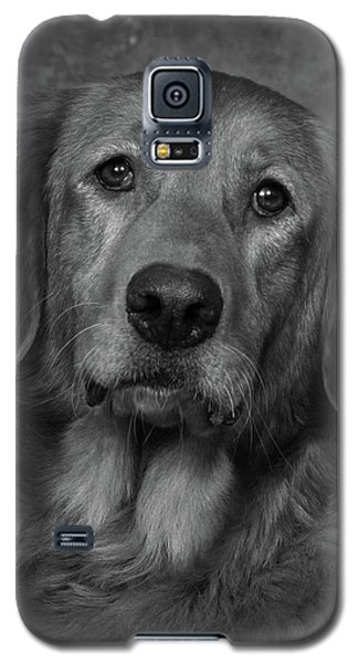 Galaxy S5 Case featuring the photograph Golden Retriever In Black And White by Greg Mimbs