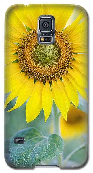 Golden Sunflower Galaxy S5 Case
