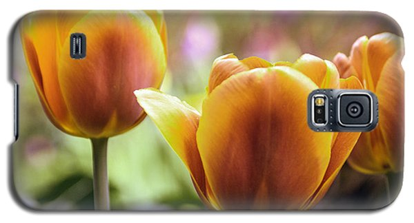 Galaxy S5 Case featuring the photograph Golden Tulips by William Havle