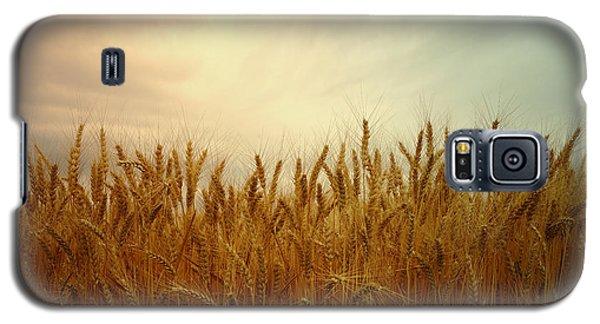 Golden Wheat Galaxy S5 Case