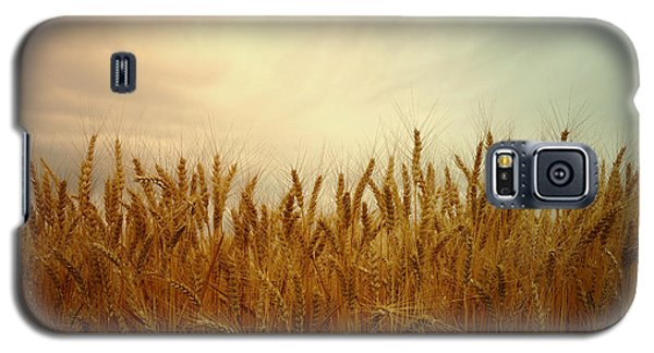 Golden Wheat Galaxy S5 Case