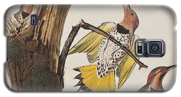 Golden-winged Woodpecker Galaxy S5 Case