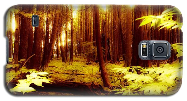 Golden Woods Galaxy S5 Case by Kim Prowse