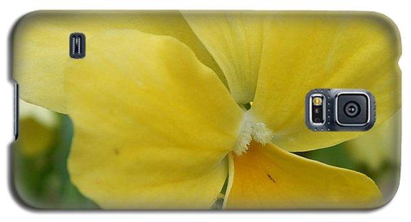 Golden Yellow Flower Galaxy S5 Case