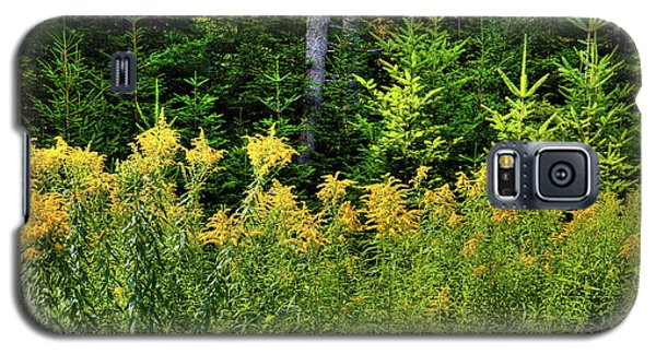 Galaxy S5 Case featuring the photograph Goldenrod In The Adirondacks by David Patterson