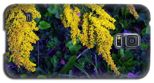 Galaxy S5 Case featuring the photograph Goldenrod by Shawna Rowe