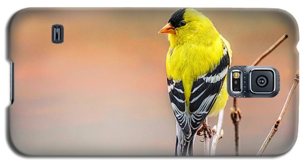Goldfinch At Sunrise Galaxy S5 Case by Susan Capuano