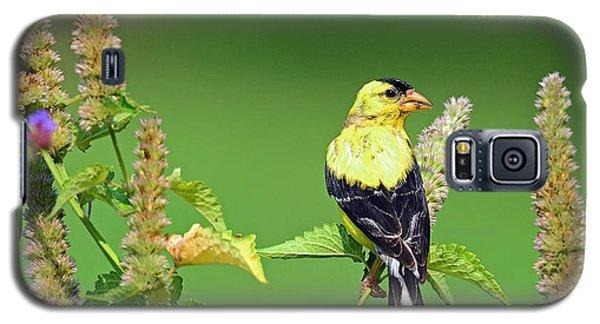 Goldfinch In A Flower Garden Galaxy S5 Case