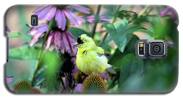Goldfinch On Coneflowers Galaxy S5 Case