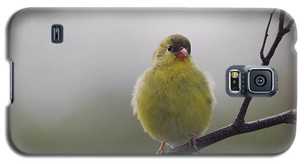 Galaxy S5 Case featuring the photograph Goldfinch Puffball by Susan Capuano