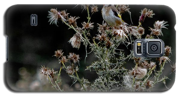 Goldfinch Sitting On A Thistle Galaxy S5 Case