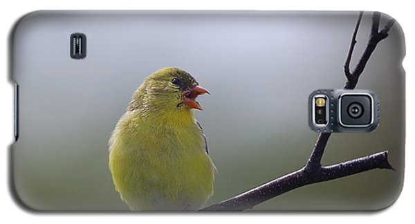 Galaxy S5 Case featuring the photograph Goldfinch Song by Susan Capuano
