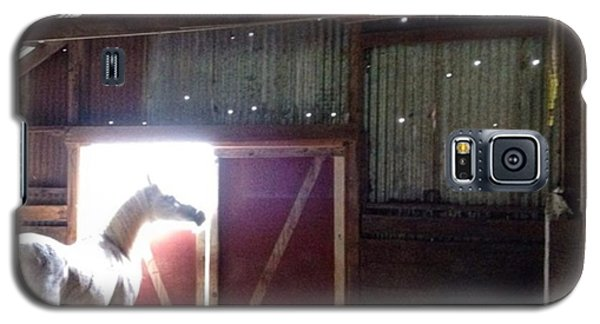 Animal Galaxy S5 Case - Good Morning, Cisco...hard To Believe by Blenda Studio