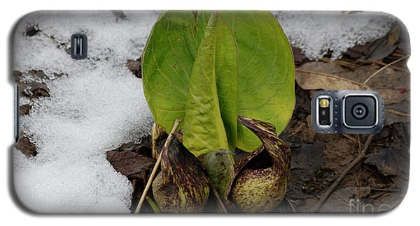 Goodbye Winter Galaxy S5 Case