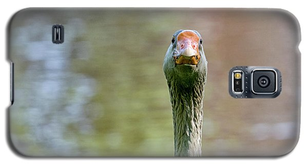 Galaxy S5 Case featuring the photograph Goose Close-up by Patricia Hofmeester